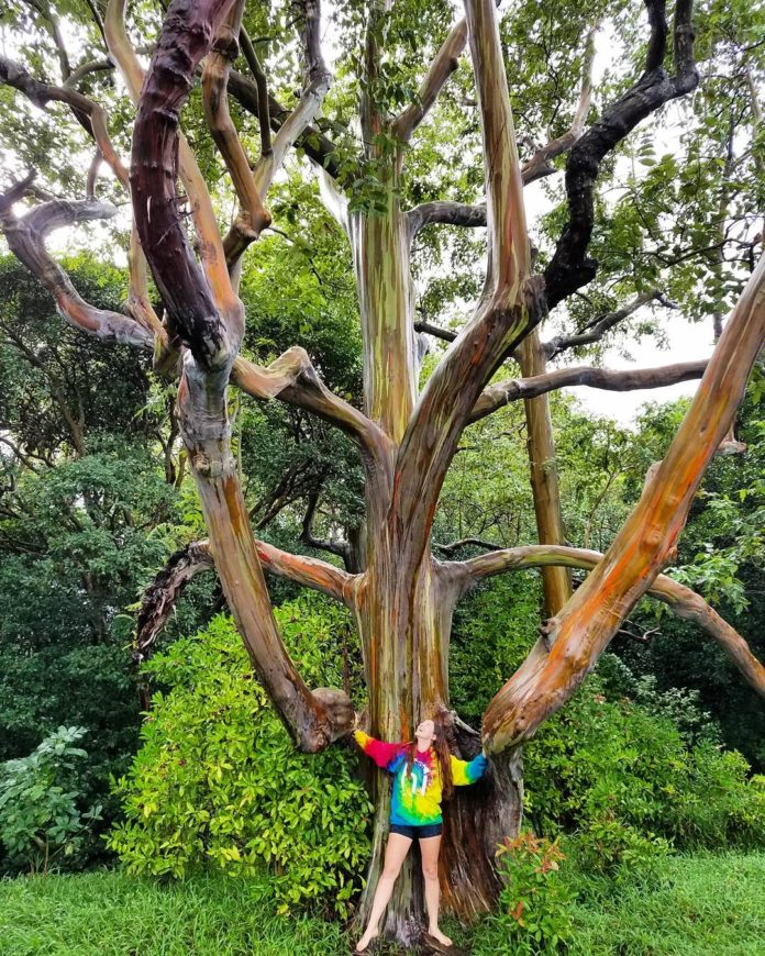 15 Most Spectacular Trees In The World